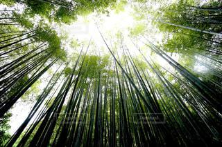 竹林の写真・画像素材[1044855]