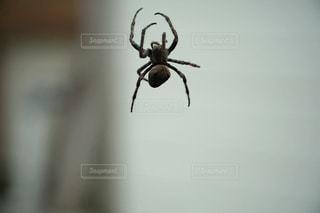 蜘蛛の写真・画像素材[1044857]