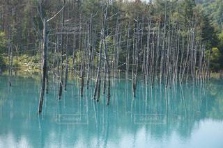 青い池の写真・画像素材[1044990]