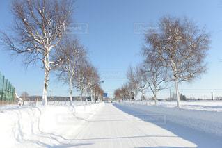 雪に覆われた木の写真・画像素材[1045843]
