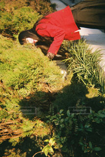 森の男の写真・画像素材[1735679]