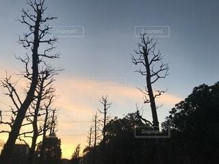 夕焼けの写真・画像素材[1035028]