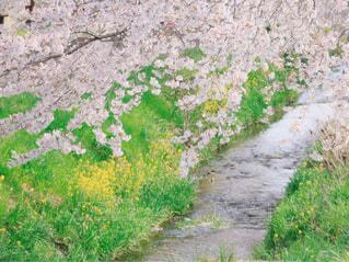 春色の写真・画像素材[1115874]