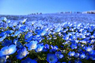 青い世界の写真・画像素材[1117401]