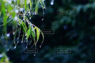 近くの木のアップの写真・画像素材[1131310]