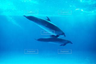 青い世界の写真・画像素材[1137229]