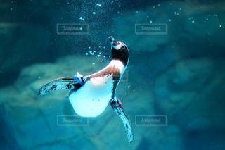 水の中を泳ぐ鳥の写真・画像素材[1137257]