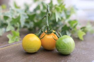 採れたてトマトの写真・画像素材[1278634]