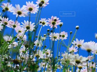 花の写真・画像素材[1837794]