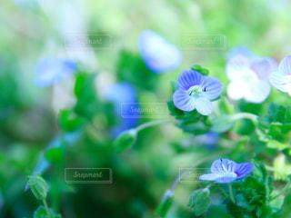 花の写真・画像素材[1840253]