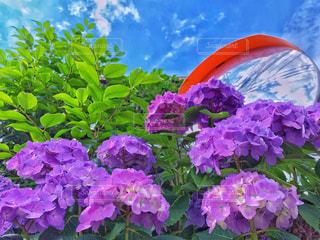 季節の花の写真・画像素材[2241633]