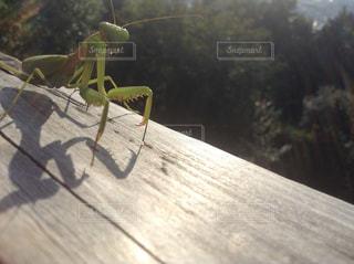 木製のテーブルの上の虫の写真・画像素材[1036315]