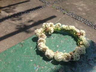シロツメクサの花冠の写真・画像素材[1848414]