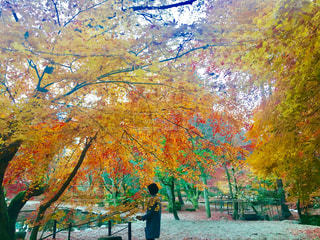 秋の紅葉の写真・画像素材[1032206]