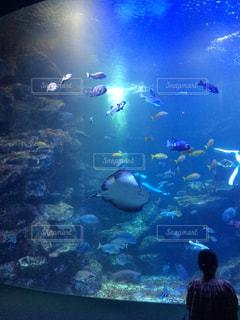 大水槽の魚たちの写真・画像素材[1032617]