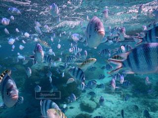 石垣島の海の写真・画像素材[1035605]