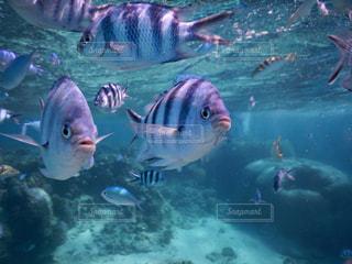 海の中の魚たちの写真・画像素材[1035606]