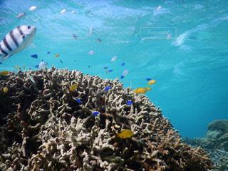 石垣島の海の写真・画像素材[1035607]