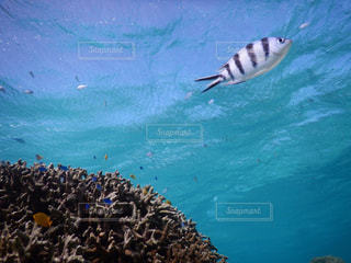 石垣島の海の写真・画像素材[1035608]
