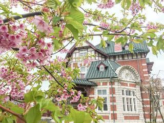 れんが造りの建物に桜の写真・画像素材[1060242]