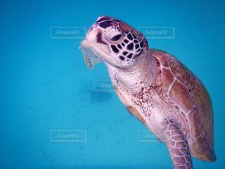 水の下で泳ぐ海亀の写真・画像素材[1145396]