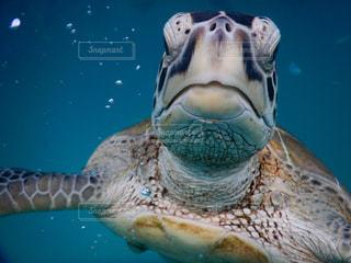 水の下で泳ぐ海亀の写真・画像素材[1145397]