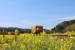 小湊鉄道  春の写真・画像素材[1095437]
