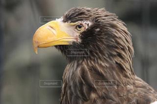 鳥のクローズアップの写真・画像素材[2443157]