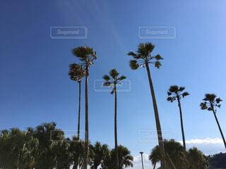 夏らしい風景の写真・画像素材[1032336]