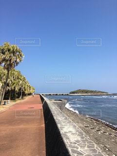 青島海岸沿いの写真・画像素材[1032338]