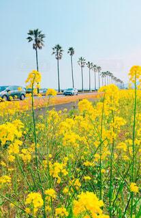 春のドライブの写真・画像素材[1032340]