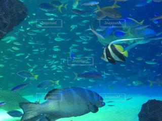 水族館の魚たちの写真・画像素材[1032661]