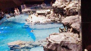 水族館のペンギンたちの写真・画像素材[1032662]