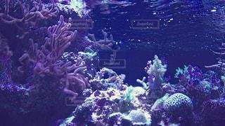 暗闇の中のサンゴの写真・画像素材[1032664]