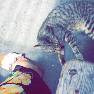 道の駅で出会った猫の写真・画像素材[1121248]