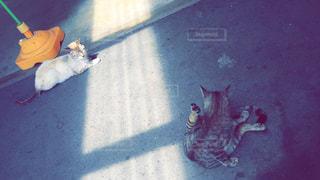 道の駅の猫たちの写真・画像素材[1121249]