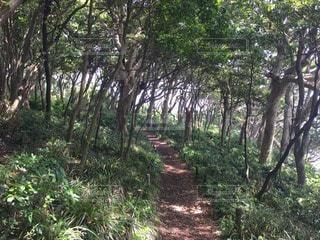 森林 - No.87858