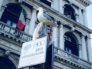 看板の上の鳥 監視中 ヴェネツィアの写真・画像素材[1032715]