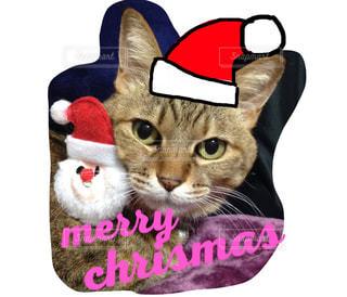 クリスマス猫の写真・画像素材[1033182]