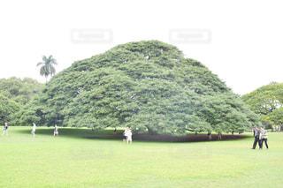 この木なんの木。の写真・画像素材[1032698]