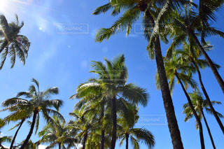 ハワイ空の写真・画像素材[1032708]