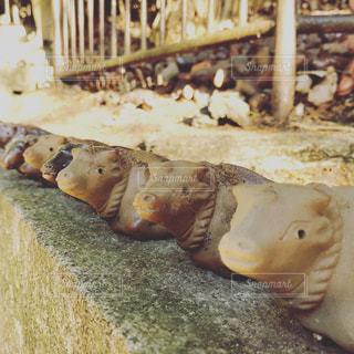 牛の焼物の写真・画像素材[1032973]
