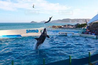 水の体の上を飛んでカモメの群れの写真・画像素材[1399866]