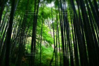 緑の写真・画像素材[1095690]