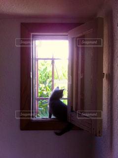 猫の写真・画像素材[1045446]