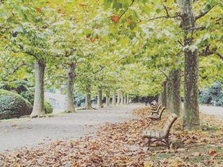 秋の写真・画像素材[1033764]