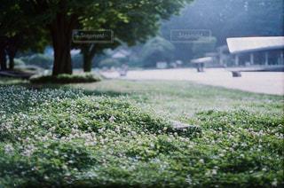 恋緑の写真・画像素材[1317397]