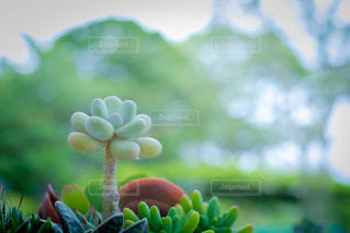近くの木のアップの写真・画像素材[1055771]