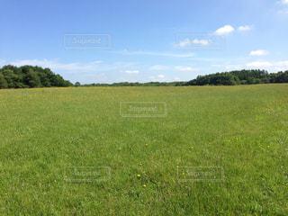 近くに緑豊かな緑のフィールドのの写真・画像素材[1034065]