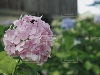 自然の写真・画像素材[78684]